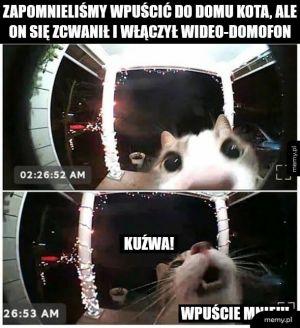 Rozpaczliwe miauuuu