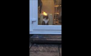 Koteł w ogniu