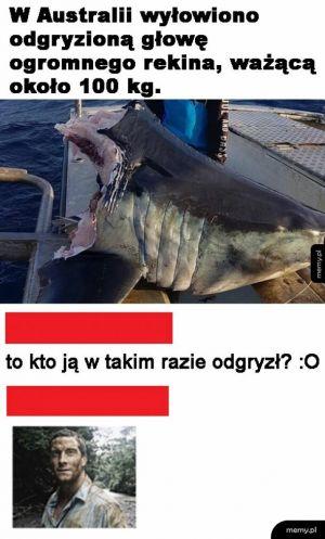 Głowa rekina