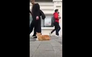 Bycie kotem w Istambule