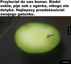 Dobry komarek