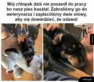 Pies z niedosytem uwagi