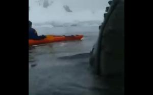 Bliskie spotkanie z wielorybem