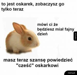 Mały królik