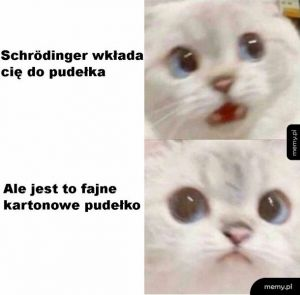 Kot Schrödingera