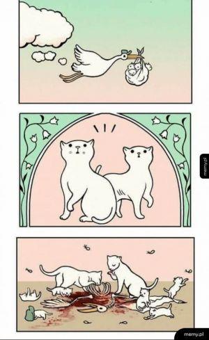 Koty się urodziły