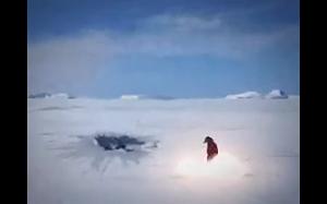 Pingwiny są niebezpieczne