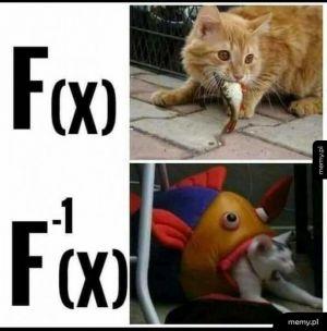 Funkcja odwrócona: matma na przykładzie kici