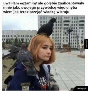 Królowa gołębi