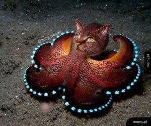 Koteł morski