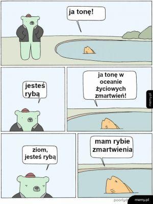 Ryba i miś