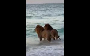 Wycieczka na plażę