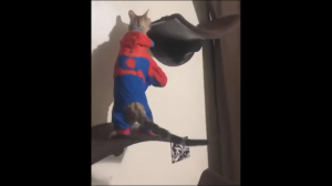 Chyba coś jest nie tak z tym kotem