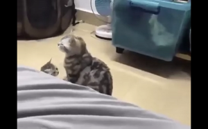 You scared me!