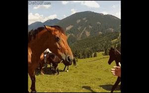 Ten moment kiedy koń postanawia Cię zjeść