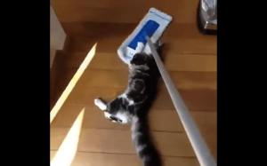 Porządki z kotami