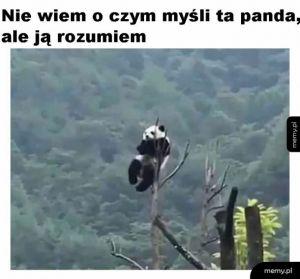 Zrozumienie dla pandy
