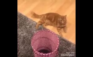 Koteł ratuje swoje zabawki
