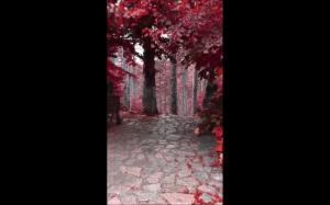 Bajkowy las, Albania