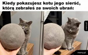 Sierść kota