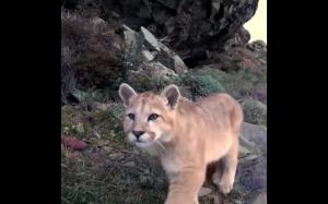 Puma znalazła kamerę