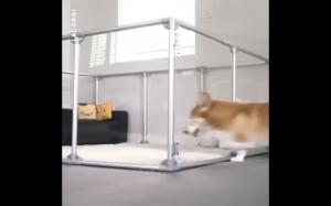 Psi apartament
