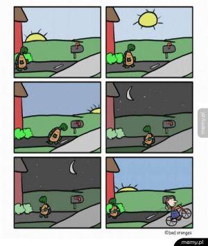 Przygody żółwika