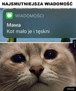 Stęskniony kot
