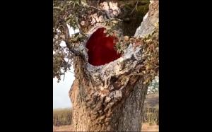 Drzewo płonie od środka