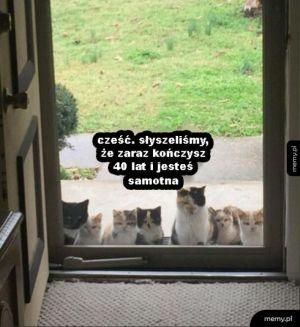 Gromadka kotów