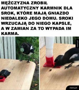 Mądre ptaki
