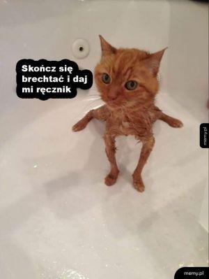 Zmoczony kotek