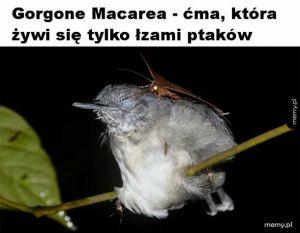 Łzy ptaków