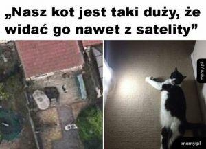 Sławny kot