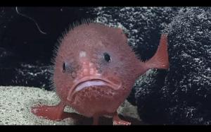 Jeśli poniedziałek byłby rybą