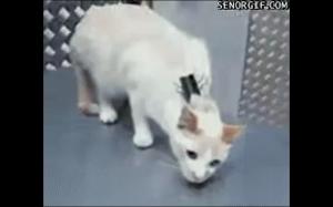 Jak uspokoić kota?