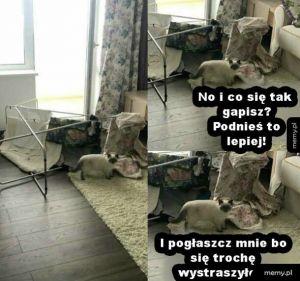 Kot vs pranie