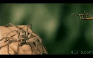 Co ta mrówka sobie myślała?
