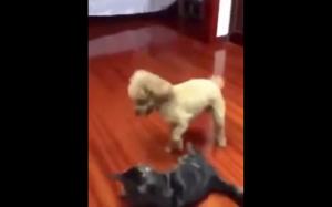 Giń kocie, to teraz mój dom!