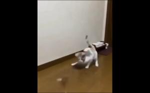 Koteł bawi się sam