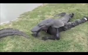 Przyczajony aligator