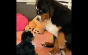 Dlaczego jesteś taki mały?
