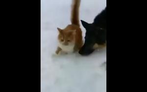 Zabawa w śniegu