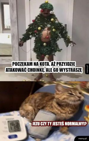 Koteł i choinka