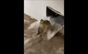 Co ta żaba robi?