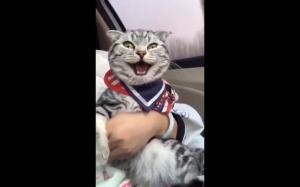Jego pierwsza podróż samochodem