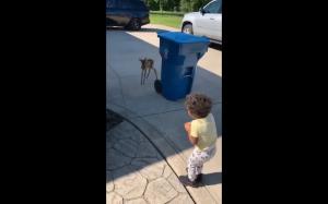 Baby deer meets baby human