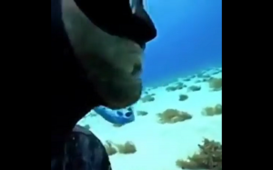 Oko w oko z rekinem