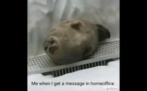 Kiedy przytniesz komara na home office