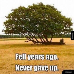 Bądźmy jak to drzewo